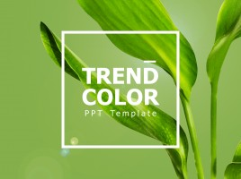 Trend Color PPT Template